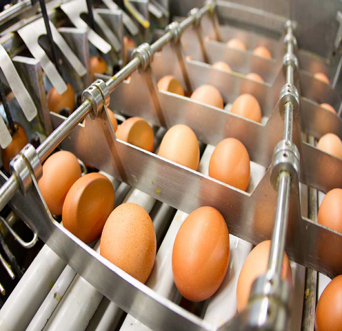 Food Safety Egg Processing Machinery
